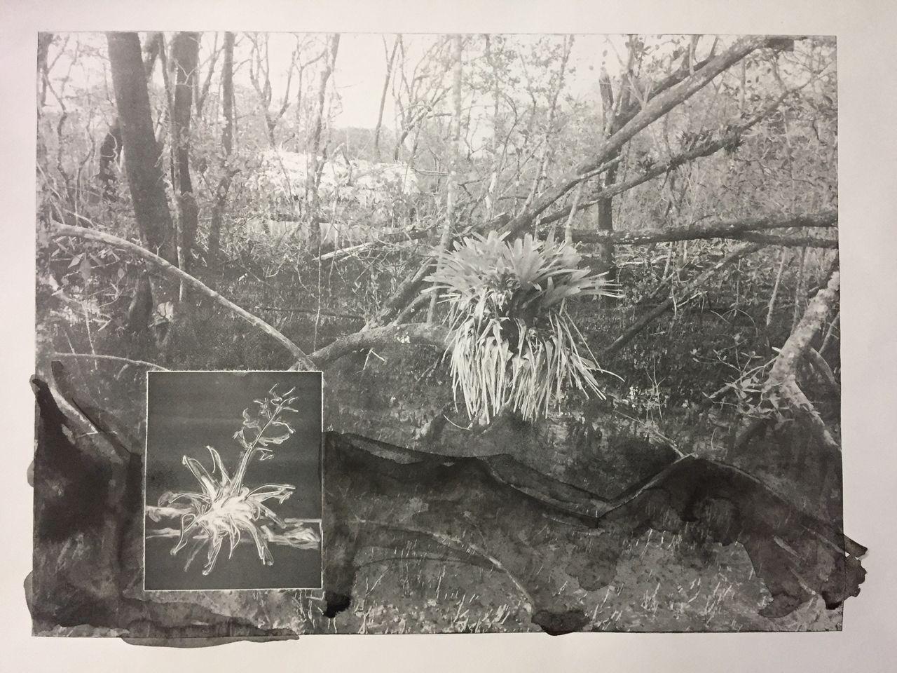 Fotogravura 54X75cm [JF142]